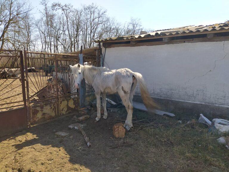 Hatósági állatorvos: le tudom lövetni a lovat…