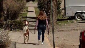 Dexter a két lábon járó és futó kutya – VIDEÓVAL