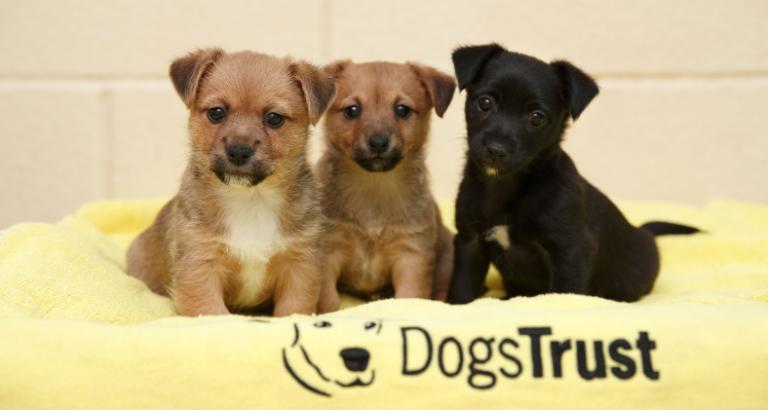Magyarországon elsőként vett részt a Dogs Trust képzésen a Pacsi