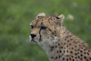 Elképesztően sok állatfajt veszélyeztet a globális felmelegedés
