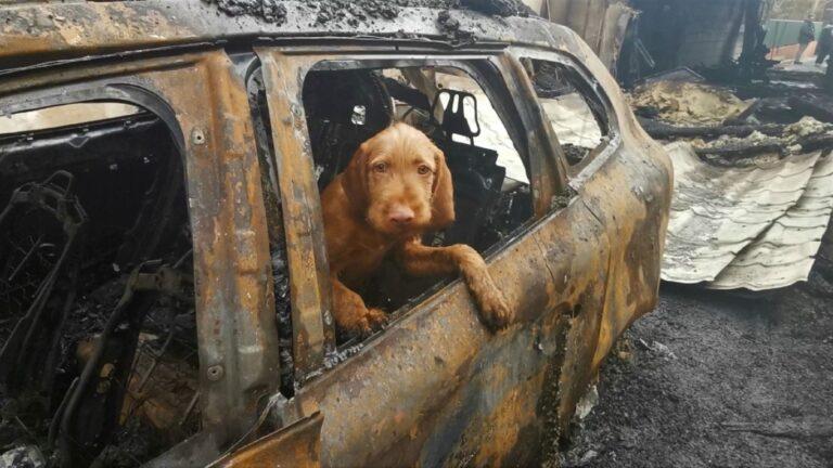 Tündéri videóban mutatja be a Katasztrófavédelem, hogy képzik ki a kutyáikat – VIDEÓVAL