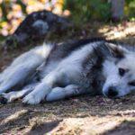 Embert és állatot is kegyetlenül bántalmazott a jászladányi testvérpár
