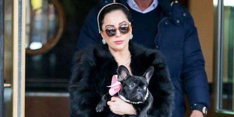 Öt ember ellen emeltek vádat Lady Gaga kutyáinak elrablása miatt