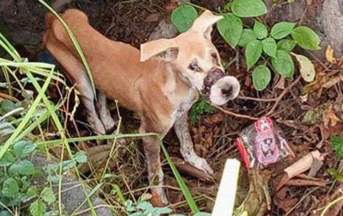 Balin megették volna, megmentői csodát tettek ezzel a kutyával
