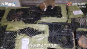 Megrázó: Kínában, egyre többen rendelnek bedobozolt háziállatokat