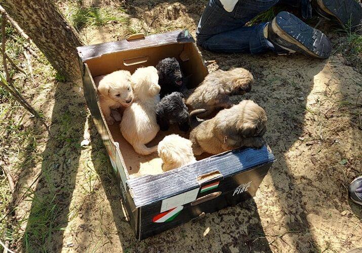 Rókalyukból mentettek meg egy éhező kutyacsaládot