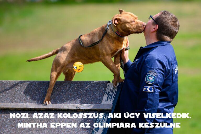 """Rendőrség: """"Kutyaviadalokról mentettük őket, most vigyázunk rájuk"""" + KÉPEK"""