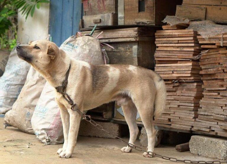 Magára hagyta a kutyáját étlen-szomjan, a szomszéd mentette meg