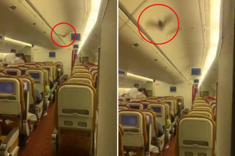 Az utastérben repkedett egy denevér, vissza kellett fordítani a repülőt -VIDEÓVAL
