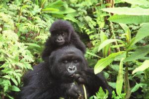 219 faj tűnhet el fegyveres konfliktusok miatt