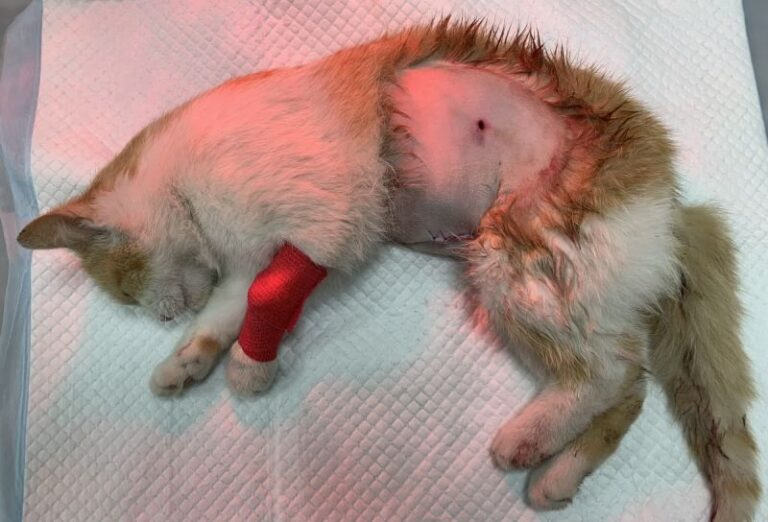 A kerítésen túlról lőhették le a család cicáját – brutális állatkínzás Hajdú-Biharban