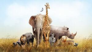 Közös felelősségünk a biológiai sokféleség megőrzése