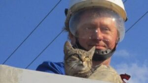7 méter magasból mentettek cicát a Békéscsabai villanyszerelők