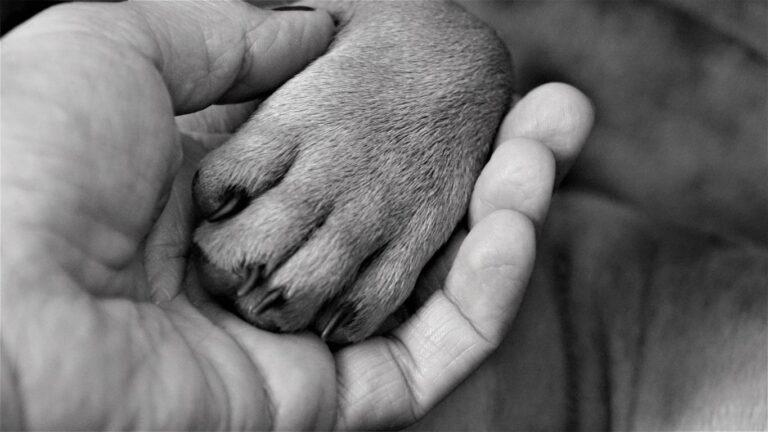 Fontos állatvédelmi kérdésekben indított kezdeményezéseket
