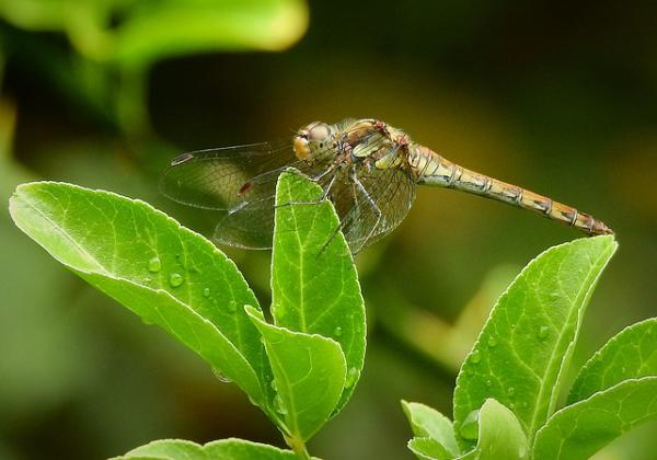 Hét hasznos rovar, amit nem szabad kiűzni a kertekből