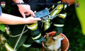 Egy vödörnyi kisrókát mentettek ki a kútból sátoraljaújhelyi rendőrök