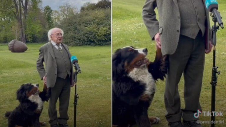 Élőben nyilatkozott az ír államfő, de a kutyája ellopta a show-t
