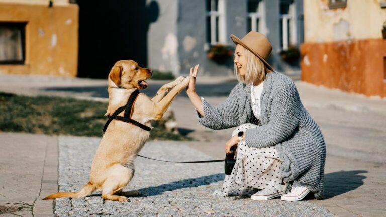 Szeptembertől Gazdijogsi is segíti a felelős állattartást