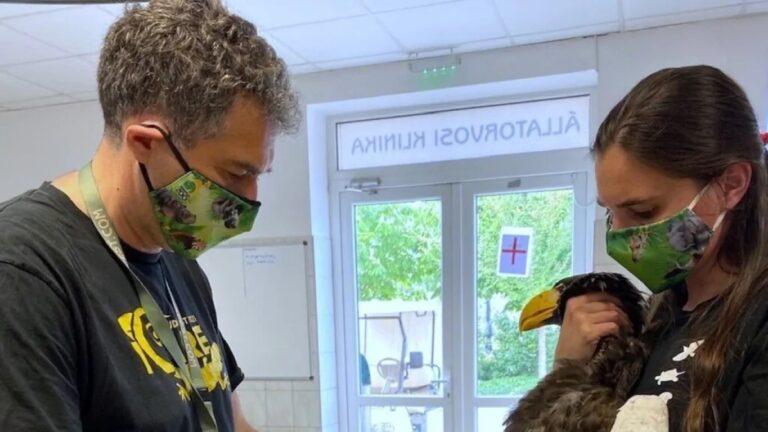 Ázsiában honos óriásrétisast példányt a Lupa-tónál, a budapesti állatkertben ápolják
