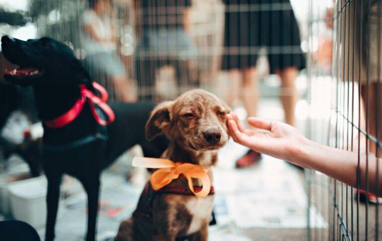 A gyógyítás és az állatvédelem kart karba öltve jár