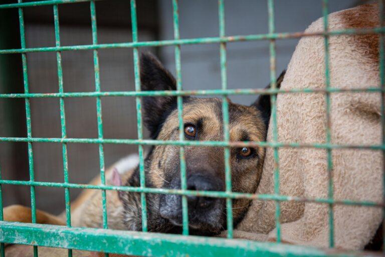Fertőtlenítőszert adományoz állatvédő civil szervezeteknek a MOL