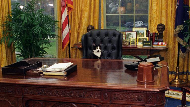 Cica érkezik a Fehér Házba