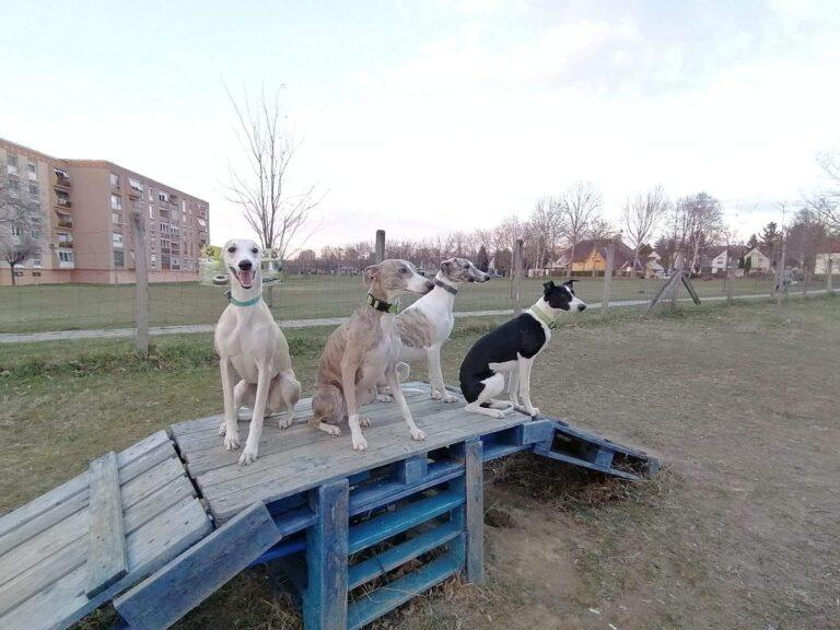 Az ország egyik legnagyobb kutyafuttatóját próbálják megmenteni civilek (Petíció)