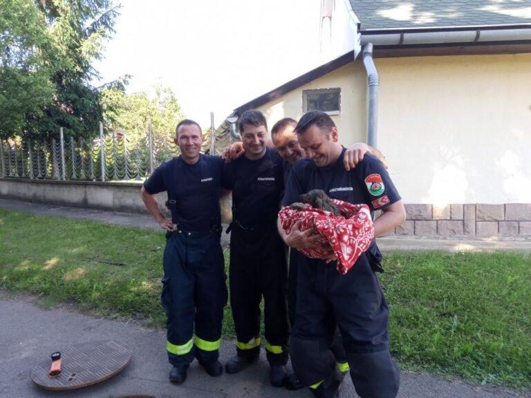 Csőbe szorult kiskutya életét mentették meg a tűzoltók