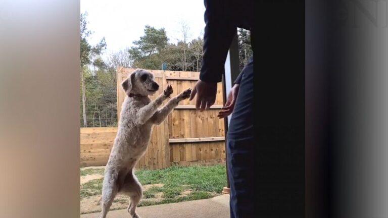 Megölelte jótevőjét a mentett kutyus – megható VIDEÓVAL