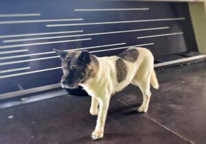 Tisza közepéről mentették ki Sziszit a kimerült, fuldokló kutyust