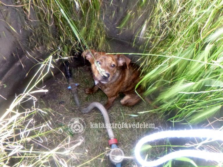 Aknába esett kutyát mentettek a tűzoltók