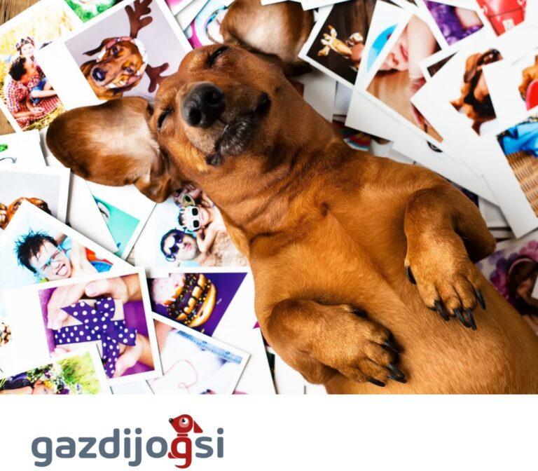 Indul a Gazdijogsi, felelős állattartás ingyenes online képzése