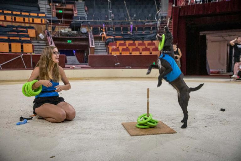 Suzyval, a keverék kutyussal állított fel magyar rekordot