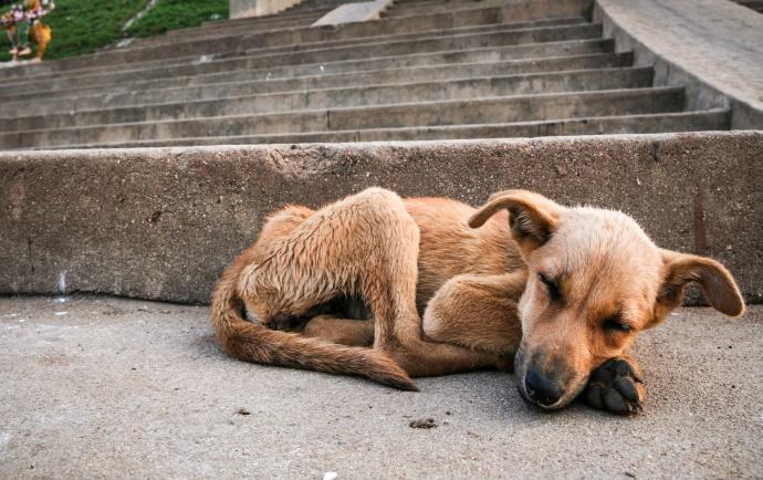 Rémesnél rémesebb esetekre derül fény, ám a büntetés gyakran elmarad: ki védi meg a megkínzott kutyákat?