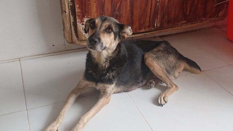 A hátrahagyott kutyákat is mentik Afganisztánból nemzetközi összefogás keretében