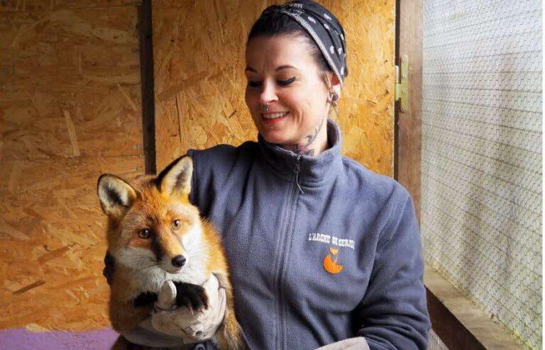Menhelyet hozott létre a francia nő elaltatásra ítélt rókák számára