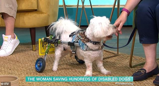 Több száz kutyát mentett meg az elaltatástól – VIDEÓVAL