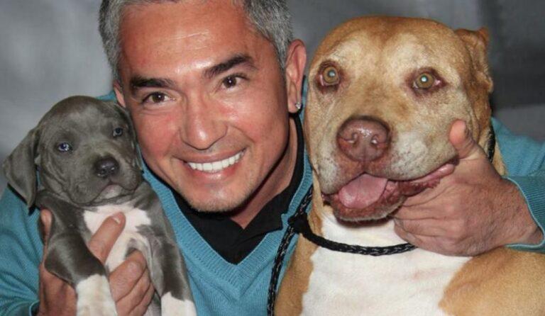 Megható gondolatokkal búcsúzott kedvencétől a híres kutyadoki