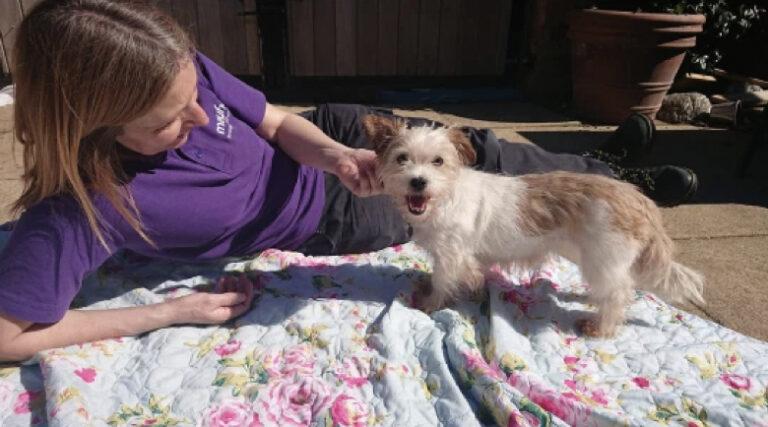 Újra képes bízni az emberekben a kutya, aki az utcán élt korábban