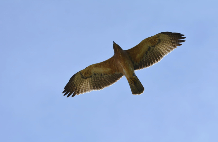 78 éve nem láttak ilyen madarat Magyarországon