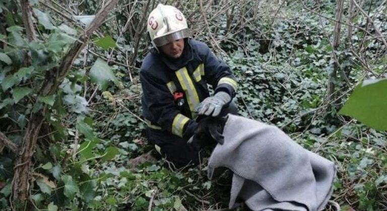 Tíz méter mély kútból mentettek ki egy kutyát az aszódi tűzoltók