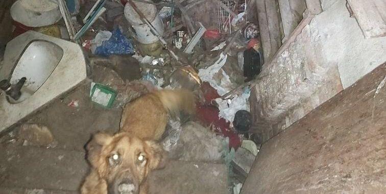 Brutális állatkínzás: egy éven át tartotta egy sötét veremben a kutyáját egy nő