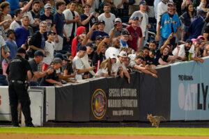 """Macska """"foglalta el"""" a pályát a New York Yankees baseball meccse alatt"""