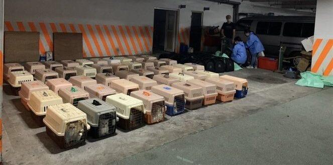 Hatalmas botrány tört ki Tajvanon: a hatóságok megöltek 154 becsempészett macskát