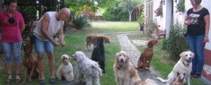 Kutyák egymás között: lehet békében, szeretetben élni