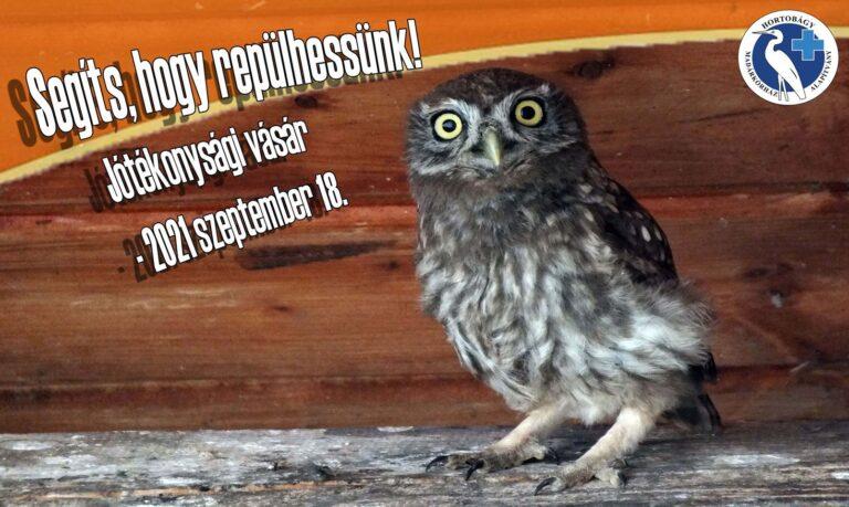Segítségre szorul a madárkórház saját laboratóriumra van szükségük! Ön is tud segíteni!
