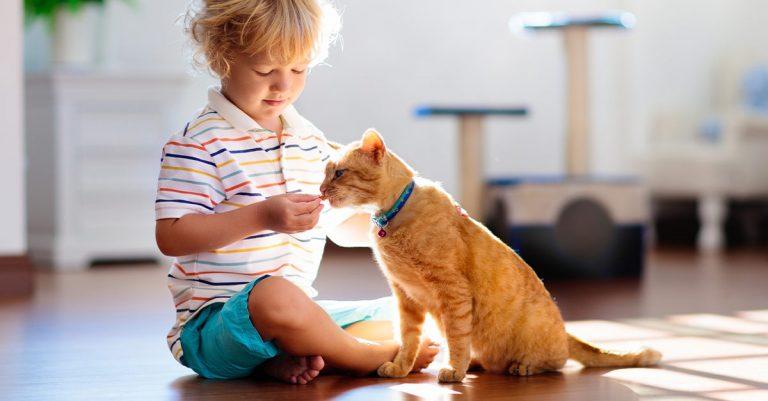 Nyugodtabbá válnak a macskák egy autista gyermeket nevelő családban