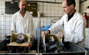 Bombahír vagy időhúzás? Az EU véget vetne az állatkísérleteknek