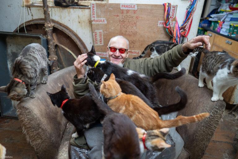 Modern kori állatkínzás? 70 macskával él együtt 56 négyzetméteren ez a férfi