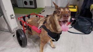 Ne legyenek többé mostohagyerekek a mozgássérült állatok! – TÜTÜ Kutya rajzpályázat